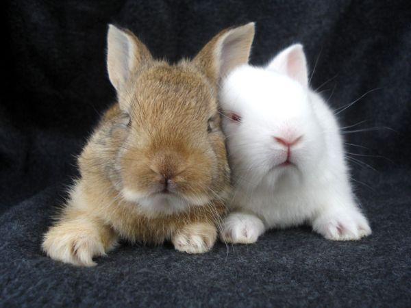 bunny-photos- (6)