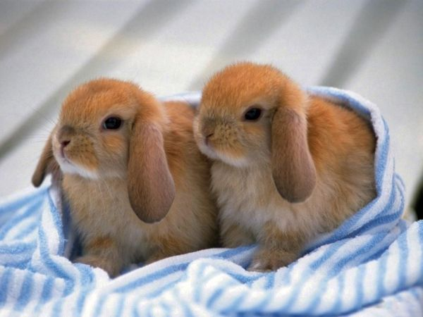 rabbit-pictures- (2)