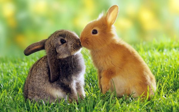 rabbit-pictures- (4)
