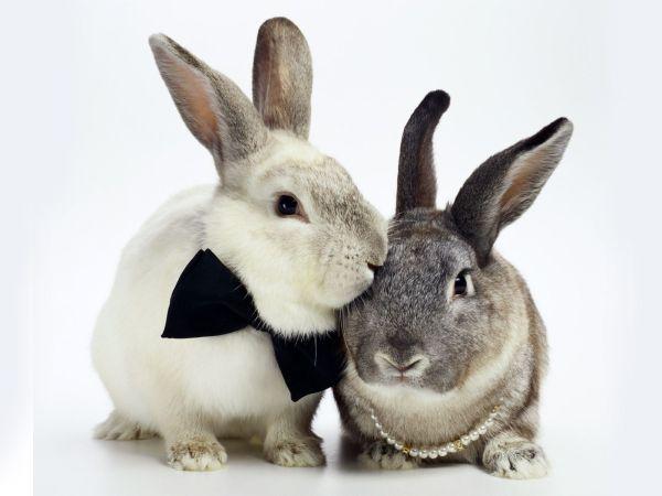 rabbit-pictures- (9)