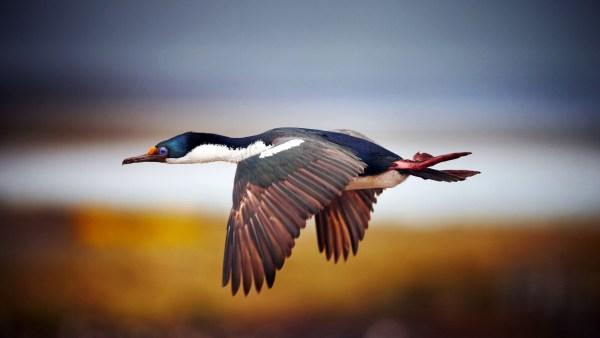 beautiful-birds-pictures-10-wallpaper- (1)