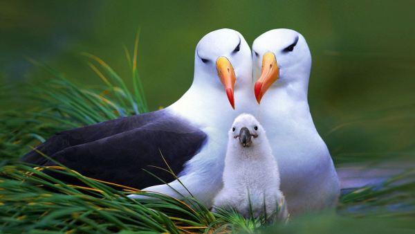 beautiful-birds-pictures-10-wallpaper- (7)