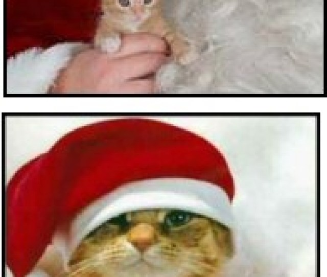 Santa Claws Father Christmas With Kitten