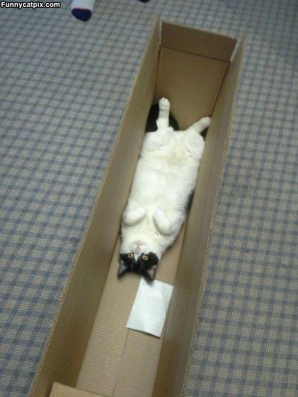 Laying In The Box