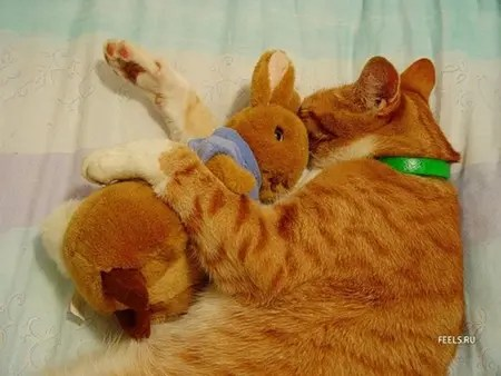 Cat sleeping holding a stuffed bunny