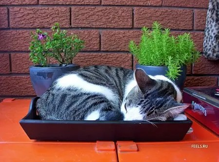 Cat sleeping in cat tray