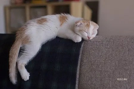 Cat sleeping on back of couch