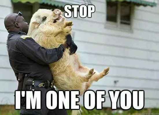 Police officer carrying a pig