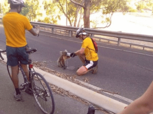 Bikers stop to give a hot Koala Bear a drink