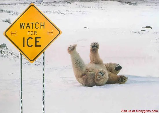 Watch for ice bear fall