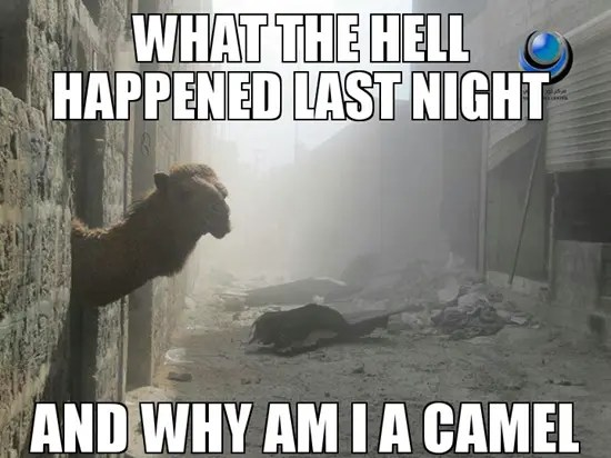 What happened last night and why am I a camel?