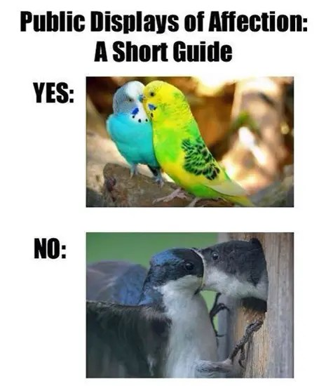 Guide to public displays of affection
