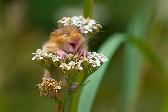 Laughing mouse in flower plant