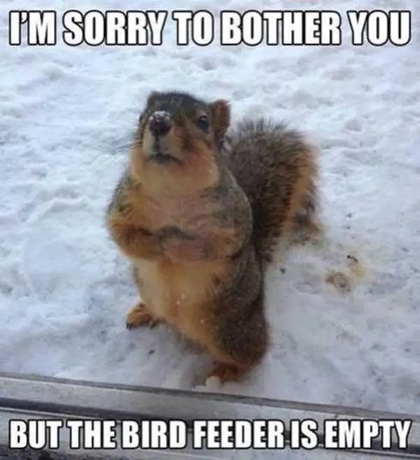 The feeder is empty
