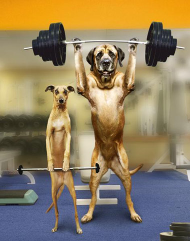 Image result for weight lifting funny pics