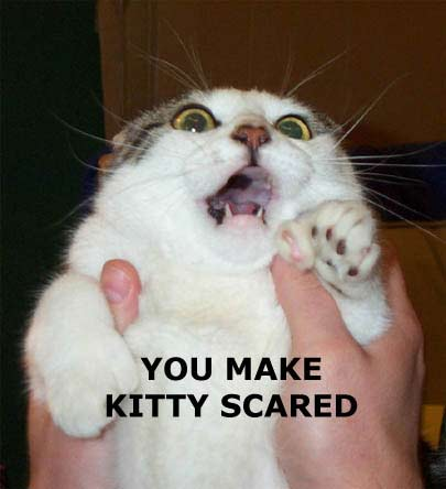The Big Talk Can Be Scary for Some LolCats