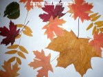 Preserving Leaves and the Fall Colors