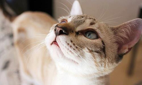 Картинки - Морда кота с красивым окрасом