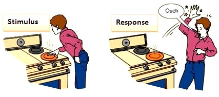 Image result for stimulus and response