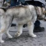 Warum gibt es keine mobilen Hundekotsauger?