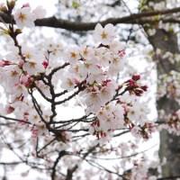JAPAN_0108_03