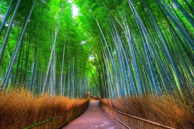 【京都嵐山懶人包】嵐山景點、交通都在這
