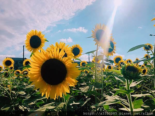 桃園向陽農場