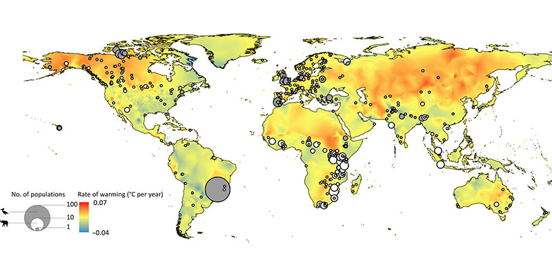 Declínios Populacionais De Mamíferos E Aves São Ligados Ao Rápido Aquecimento Do Clima