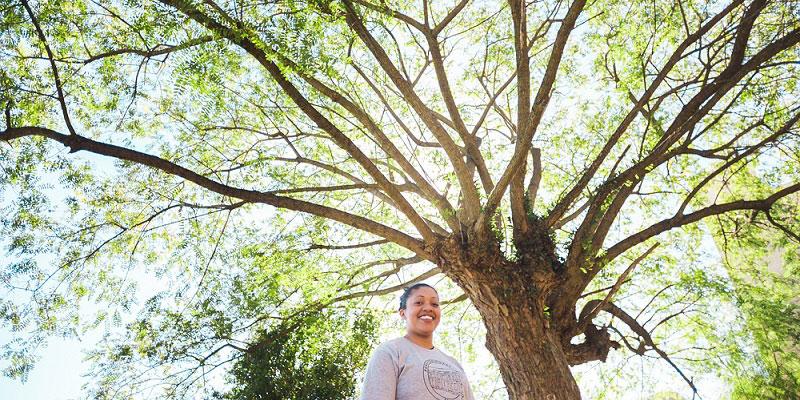 O Projeto Que Dá Voz às árvores No Sul Do Brasil