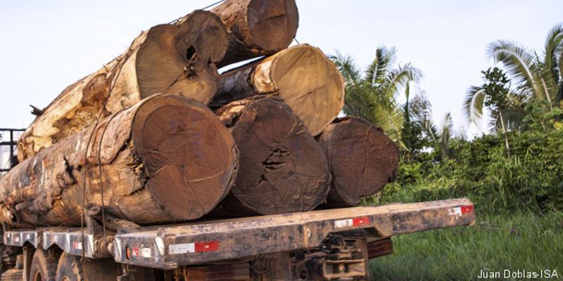 Por Madeira E Carne, Desmatadores Avançam Sobre O Xingu