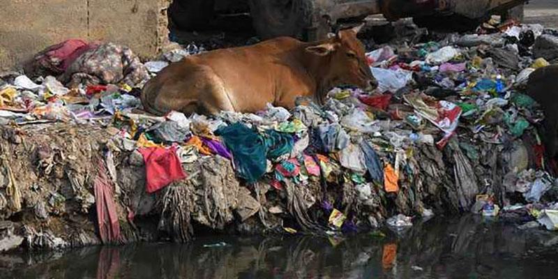 Comprovada A Biodegradabilidade Do Plástico