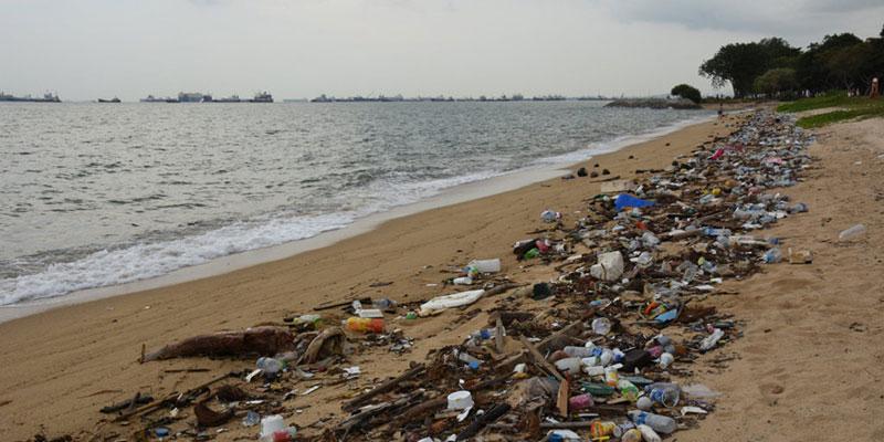 FAO Lista Cinco Maneiras De Reduzir Nossa Dependência Do Plástico