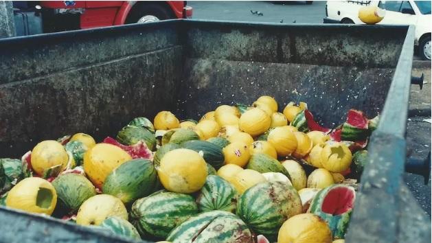 Desperdício De Alimentos Chega A R$ 1 Mil Por Família Por Ano, Diz Embrapa