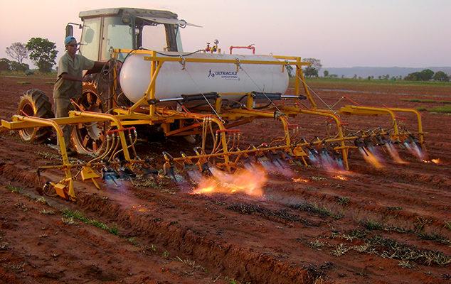 Ervas Daninhas: Conheça As Técnicas De Manejo Sem Agroquímicos