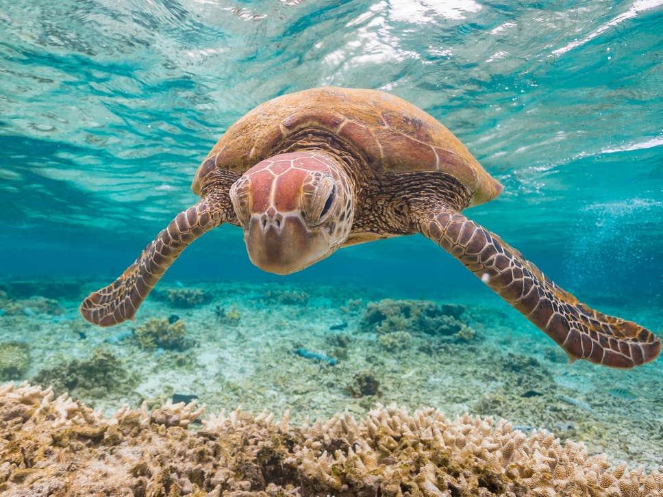 A Grande Barreira De Corais Se Deteriorou Para Um 'ponto Crítico' Em Meio Ao Aquecimento Do Mar E A Poluição Generalizada