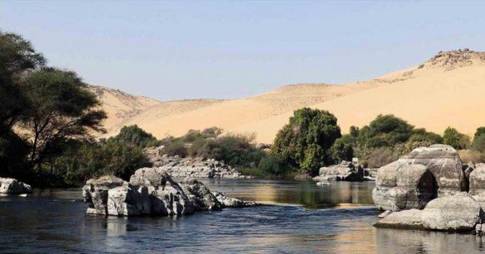 Cientistas Usam água De Esgoto Reciclada Para Cultivar Uma Floresta No Meio Do Deserto