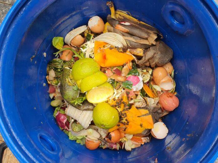 Floripa Implanta Coleta De Lixo Orgânico Porta A Porta