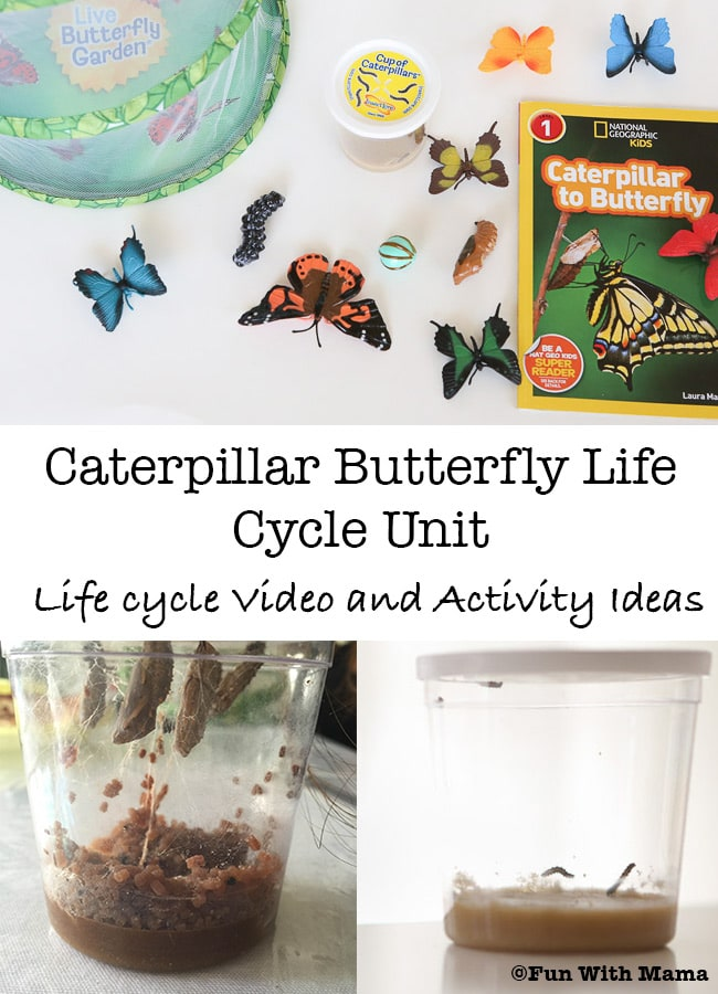 caterpillar butterfly life cycle unit for preschool