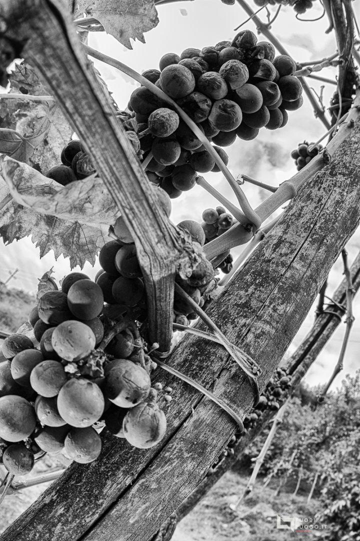 Mariangelo e la vigna ©FuoriFuoco.it
