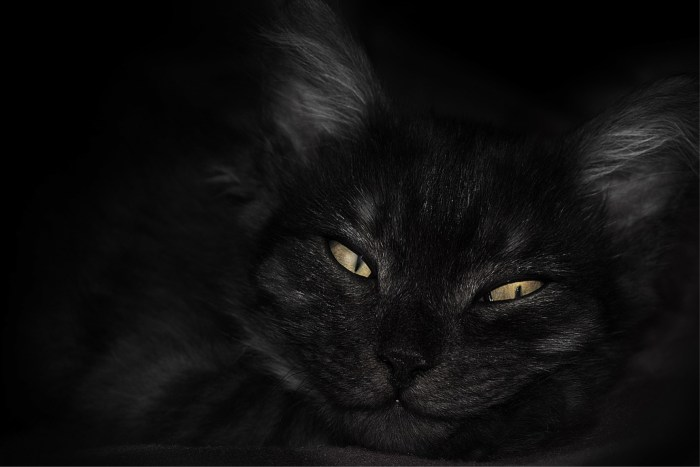 20x30 cat dark