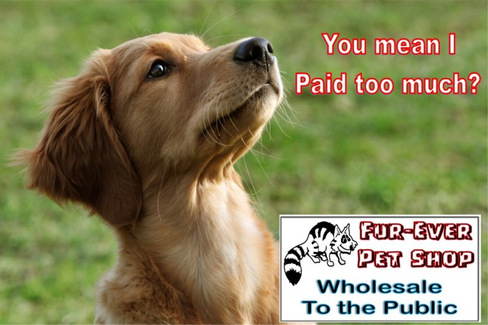 20x30 dog paid too much