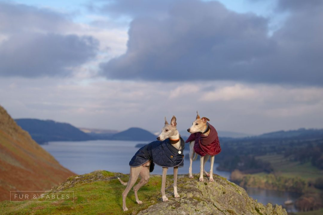 Redhound fleeces and quilted & wax jackets