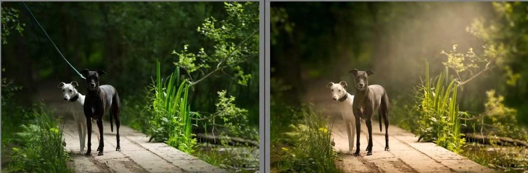 Professionally edited dog photoghs
