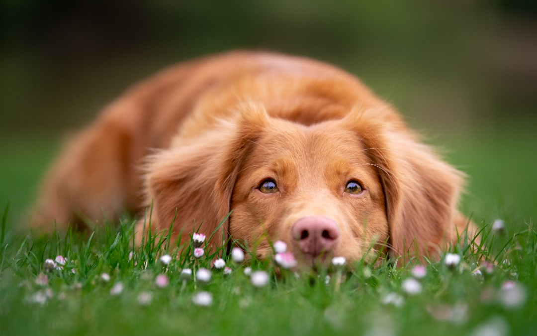 What to expect on your dog photoshoot