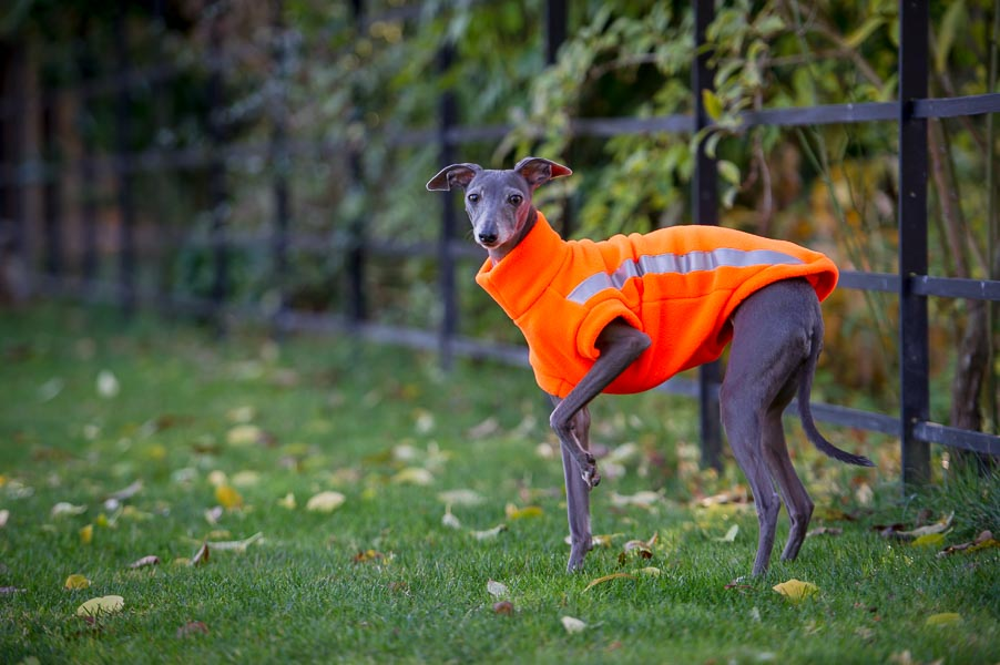 high visibility dog jumper with reflective strips