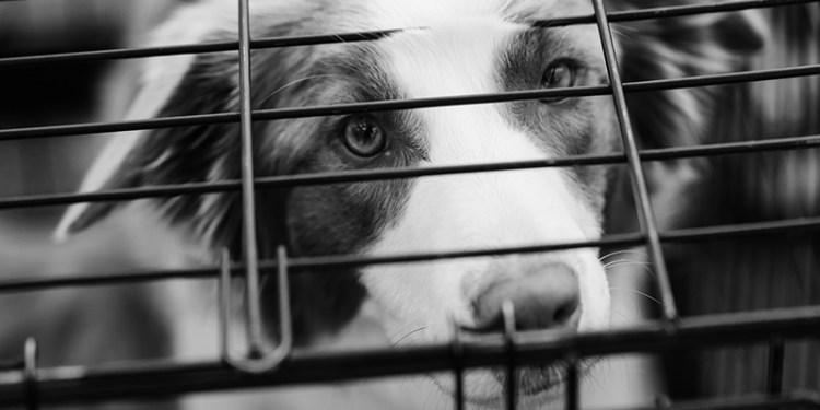 abituare il cucciolo al kennel banner