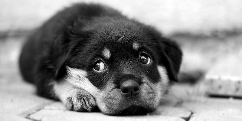 il cucciolo sporca in casa banner