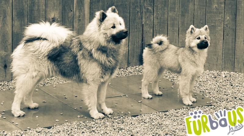 banner adozione cane adulto