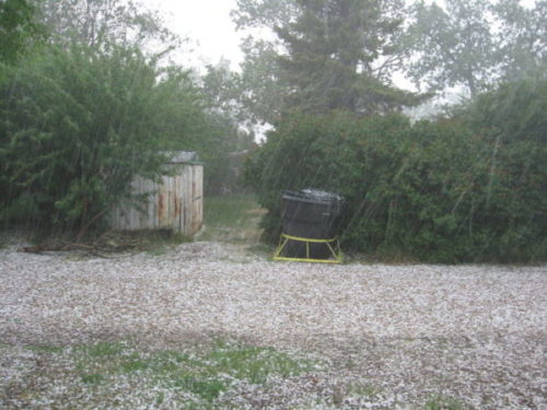 anti-hail netting – Furrow and Trowel