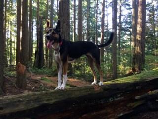 dog-forest-2